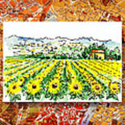 Italy Sketches Sunflowers Of Tuscany Poster