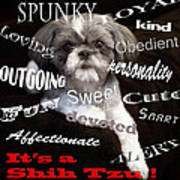 It's A Shih Tzu Poster by William Schmid
