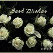 Ivory Roses Greeting  Poster