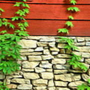 Ivy On Stone And Wood Poster
