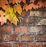 Ivy Over Brick Wall Poster