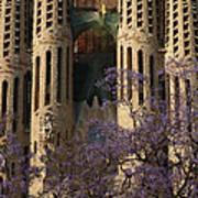 Jacaranda In Barcelona Poster by Christine Burdine