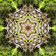 Jack In The Pulpit Mandala Poster