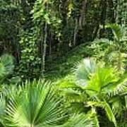 Jamaican Jungle Poster