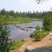James Creek Pond Poster
