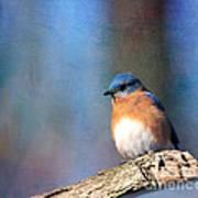 January Bluebird Poster