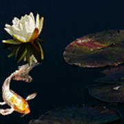 Japanese Koi Fish And Water Lily Flower Poster