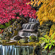 Japanese Laced Leaf Maple Trees In The Fall Poster