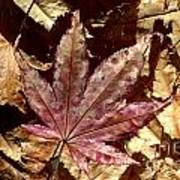 Japanese Maple Tree Leaves Poster