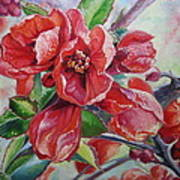 Japanese Quince In Blossom Poster