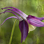 Japanese Serenity Columbine Blossom Poster