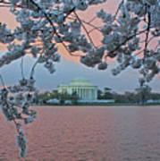 Jefferson Memorial Cherry Blossoms Poster
