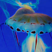 Jellyfish 2 Digital Artwork Poster
