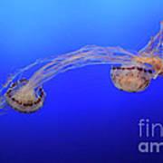 Jellyfish 7 Poster