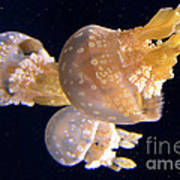 Jellyfish 8 Poster