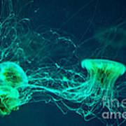 Jellyfish Breaking Away Poster by Artist and Photographer Laura Wrede