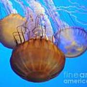 Jellyfish Trio Poster