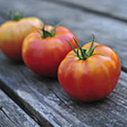 Jersey Tomatoes  Poster