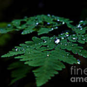 Jeweled Fern Poster by Chris Heitstuman