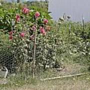 Jo Jo's Garden 3 Poster