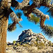 Joshua Tree And Jumbo Rocks By Quail Springs In Joshua Tree Np-ca Poster