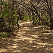 Journey Through The Cedars Poster