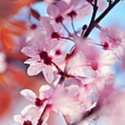 Joy Of Spring. Pink Spring In Amsterdam Poster