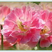 Joyful Spring Tulips Poster