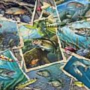 Jq's Fishing Collage Poster