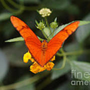 Julia Butterfly 1 Poster