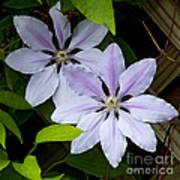 Julia's Bouquet   #6321 Poster