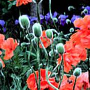 Julia's Garden II Poster