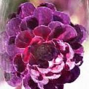 Jumbo Blossom Poster