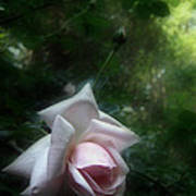 June Rose Poster