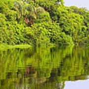 Jungle River Poster