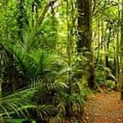 Jungle Scene Poster