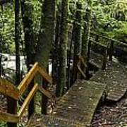 Jungle Walkway Poster