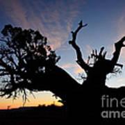 Juniper Tree, Canyonlands National Park Poster