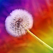 Just Dandy Rainbow Poster