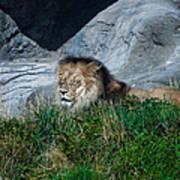 Just Lion Around Poster