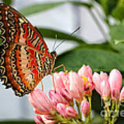 Just Pink Butterfly Poster