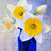 Just Plain Daffy 2 In Blue - Flora - Spring - Daffodil - Narcissus - Jonquil  Poster