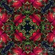 Kaleidoscope Made From An Image Of A Coleus Plant Poster