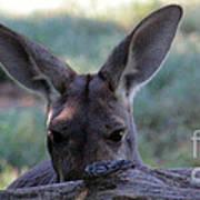 Kangaroo-4 Poster