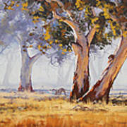 Kangaroo Grazing Poster by Graham Gercken