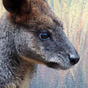 Kangaroo Potrait Poster