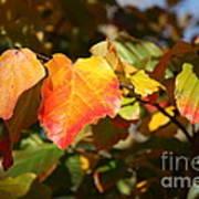 Kansas Fall Leaves Close Up Poster