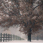 Kansas Snowstorm - Tree And Fence Poster