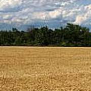 Kansas Wheat Field 5a Poster