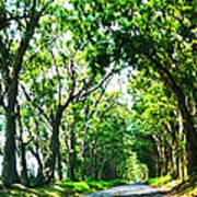 Kauai Trees Poster